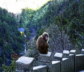 安徽九华山多名游客遭猴咬 景区称巡查人手不够