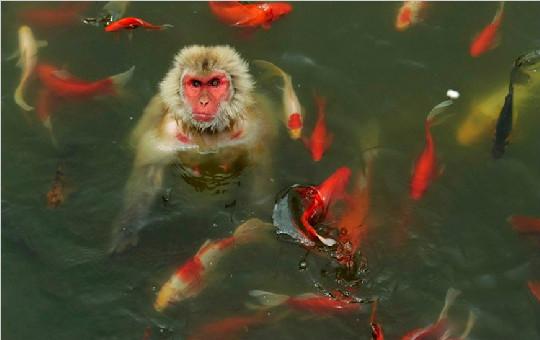 美国《时代》周刊评出2013年最惊奇图片 中国17张图片入选