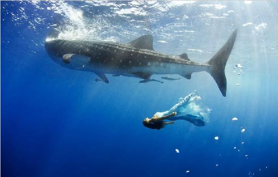 澳大利亚摄影师海底拍摄美女与鲨鱼同游合照