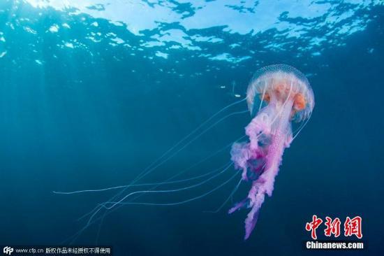 又见剧毒水母!泰国政府吁游客赴海岛游泳需警惕