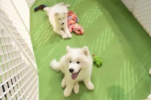 上海某公园专设宠物门票30元/只 园方:为约束宠物主人
