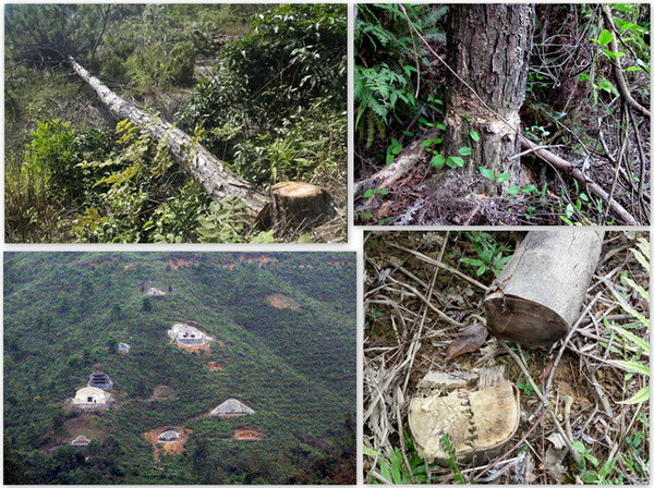 毁林盖别墅、建豪华坟墓,广东观音山国家森林公园乱象无人管?